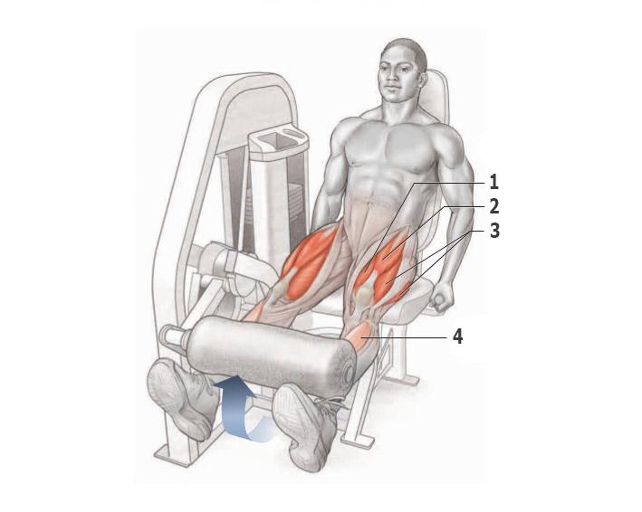 Разгибания ног в тренажере
