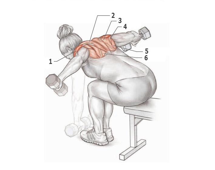Упражнения с гантелями в картинках для мышц спины лямки
