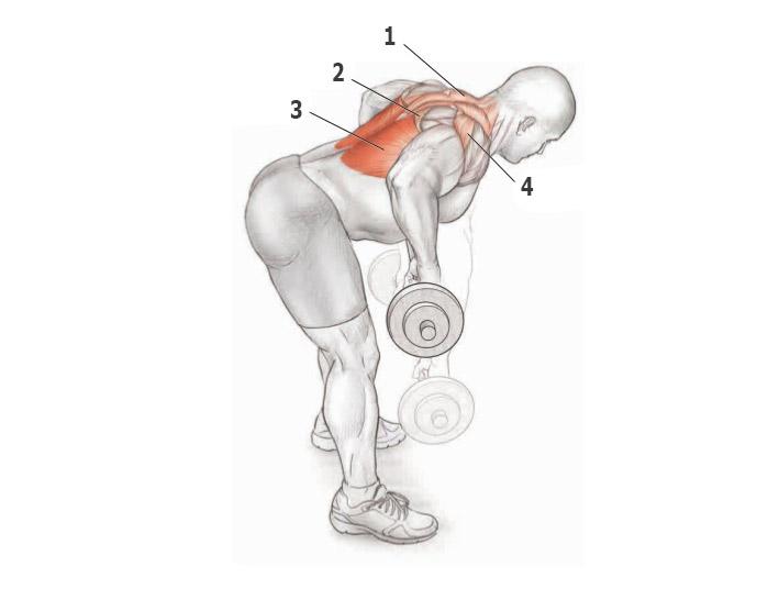 Упражнения для спины штанга гантели фотогалереи
