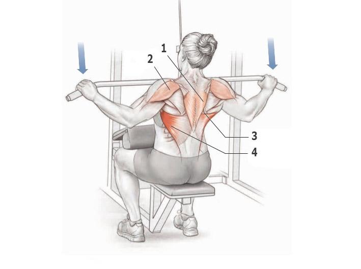 поговорим картинки как накачать мышцы спины свидетели тех