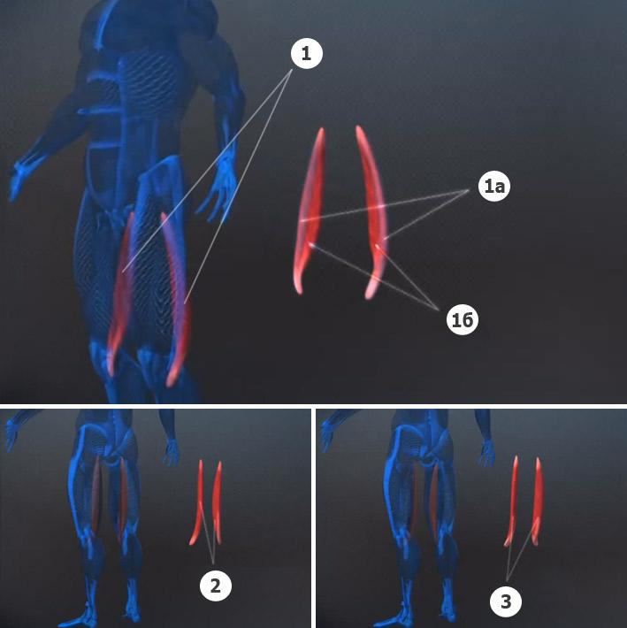 Мышцы ног упражнения