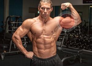 Бицепс - упражнения, анатомия, особенности тренировки