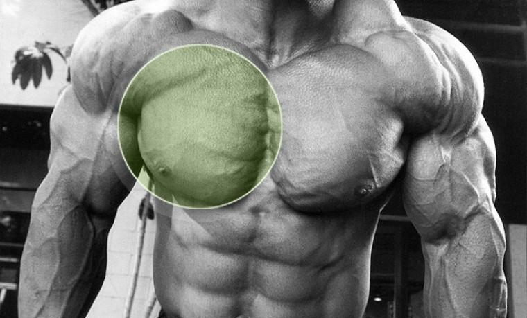 Грудь - упражнения, особенности тренировки, анатомия