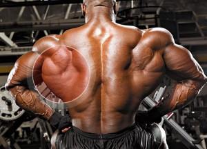 Широчайшие - упражнения, анатомия, особенности тренировки