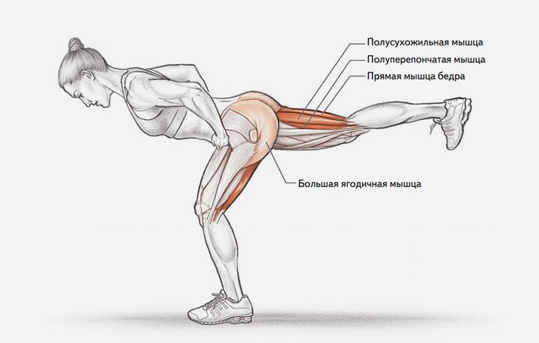 Анатомия упражнения наклоны на одной ноге