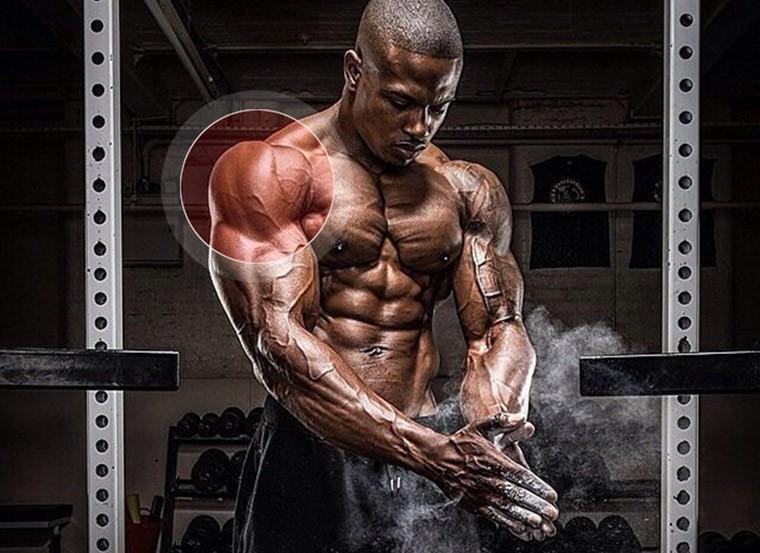 Плечи (дельтовидные) - упражнения, особенности тренировки, анатомия