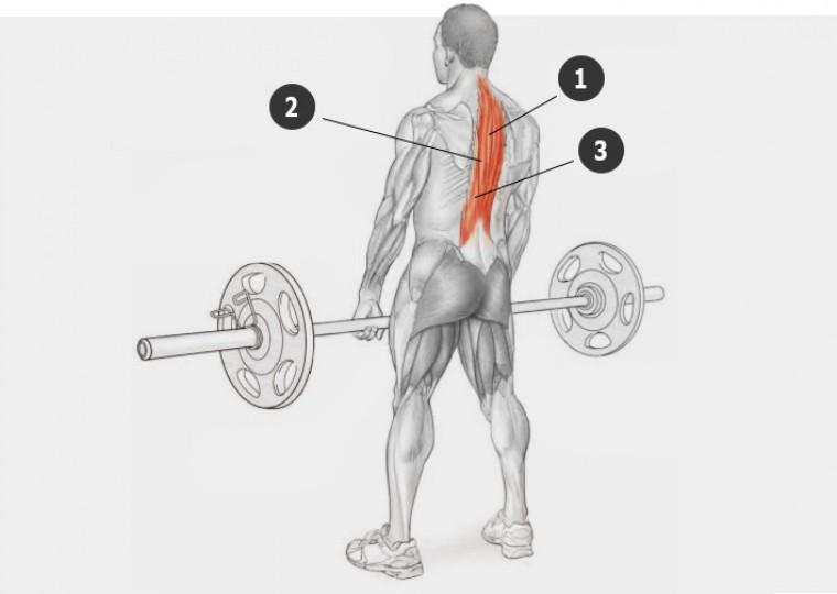 Анатомия поясничных мышц