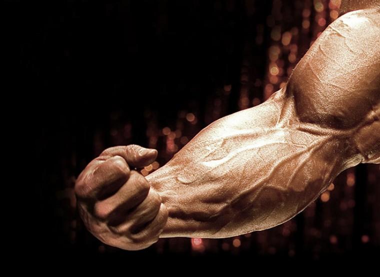 Предплечья - упражнения, анатомия, особенности тренировки