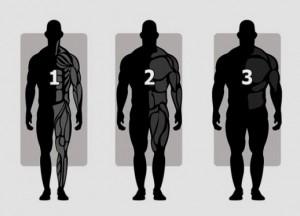 Распределение нагрузок на тренировке