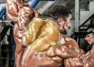 Трапеция - упражнения, анатомия, особенности тренировки